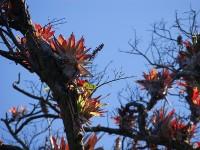 Epiphyten im Nationalpark Vulkan Poás