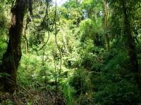 Farnwald in den La Paz Waterfall Gardens