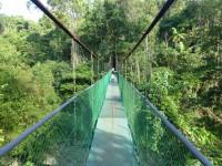 Hängebrücke im Tirimbina Park