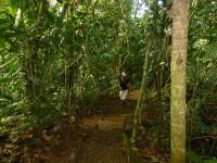 Wanderweg im Tirimbina Reservat