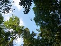 Das Dach des Regenwaldes