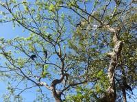 Baum mit Affen