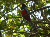 Ein schöner bunter Vogel