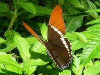 Schmetterling im Orosi-Tal