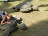 Schildkröten im Vargas-Park