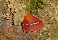 Schmetterling in Monteverde