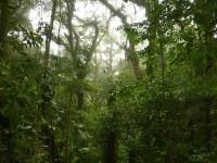Wald.Schön.Grün.Nass.