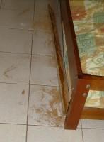 Hier waren Termiten am Werk