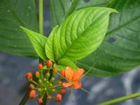 Schöne tropische Blüten